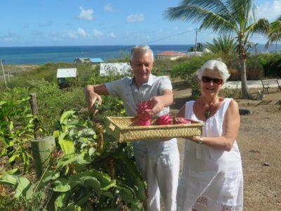 Récolte de Pitaya par Jean Pierre et Sylvie de France