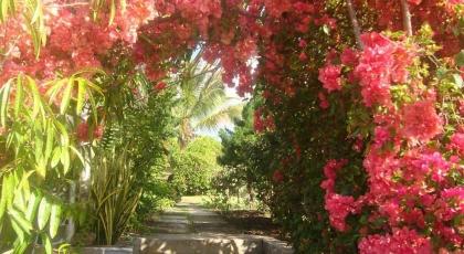 Jardin de la Résidence Foulsafat