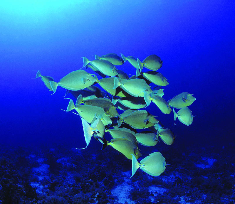 Rodrigues sous la mer