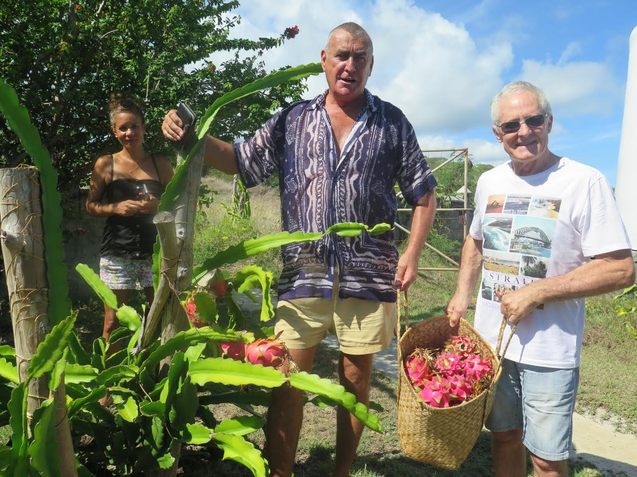 Récolte de pitayas